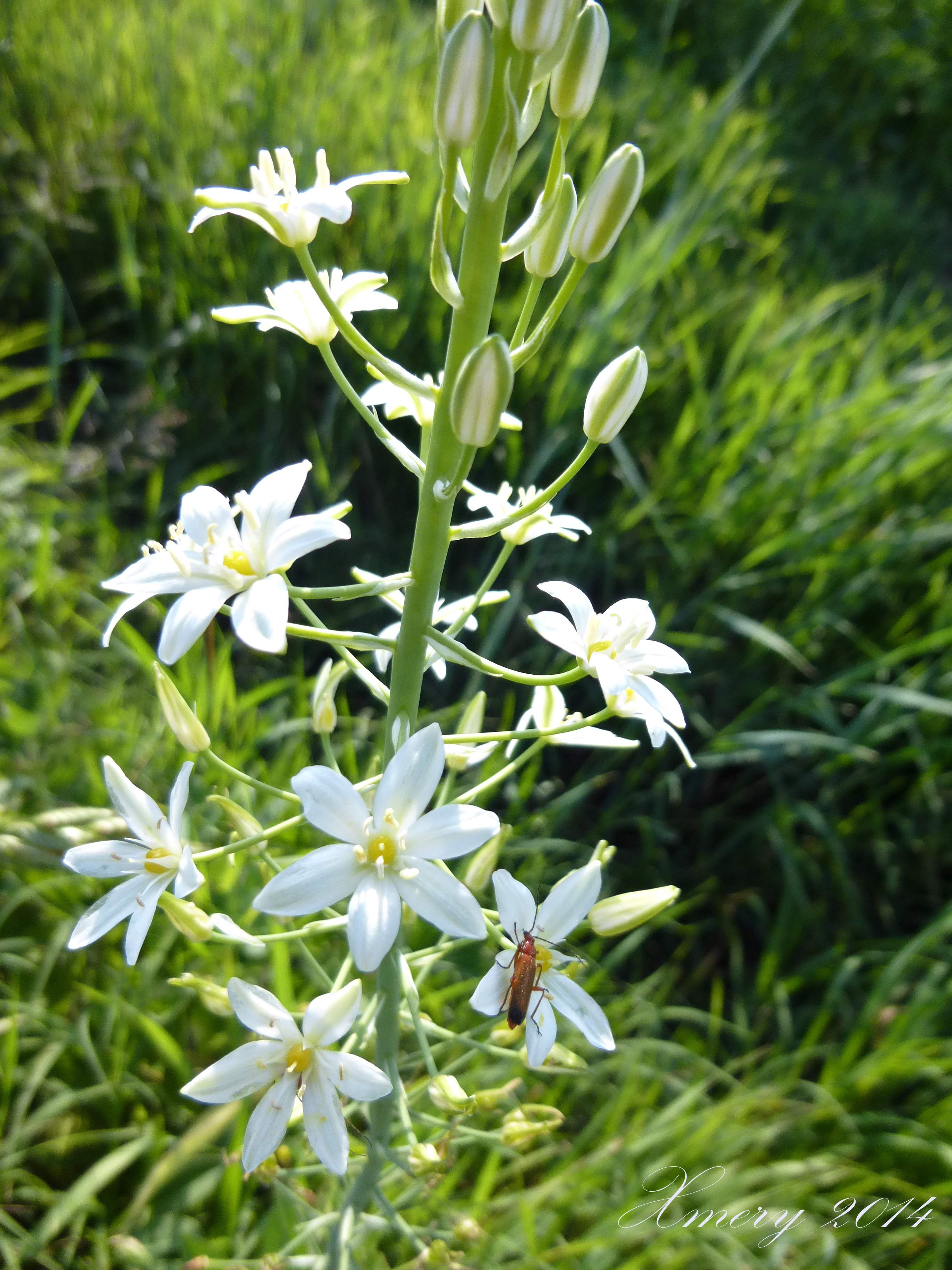 Fiori Selvatici Foto E Nomi erbe spontanee in pianura padana. | ilgiardinonascosto