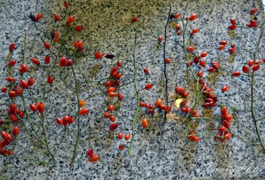 P1110229-crop xmery