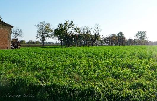 P1110805-crop xmery