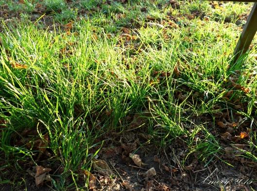 P1110815-crop2 xmery2