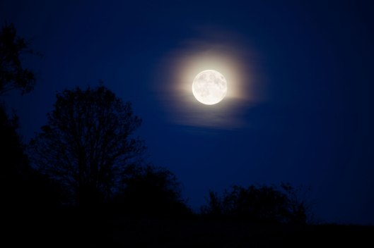 moonlight-landscape-11287160000RlIy luna piena