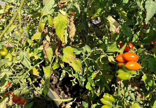 20200807_153446 crop xmery